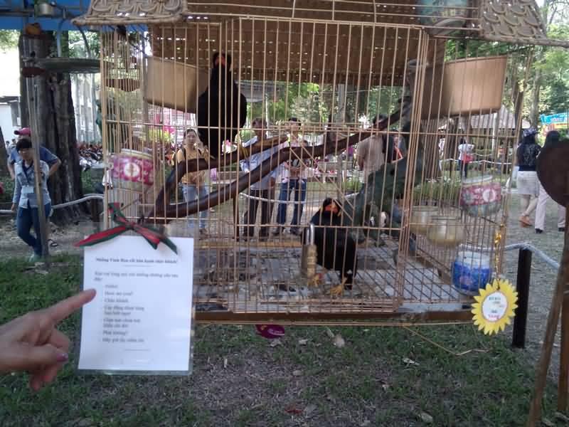 Đến Hội Hoa Xuân xem cặp chim nhồng đọc thơ lục bát