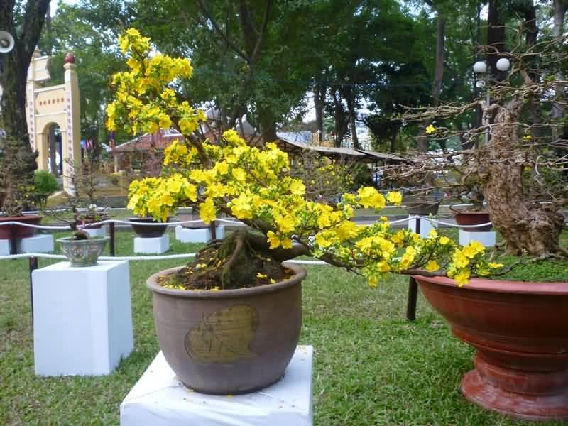 Hội Hoa Xuân 2014: 335 giải thưởng cho các nghệ nhân