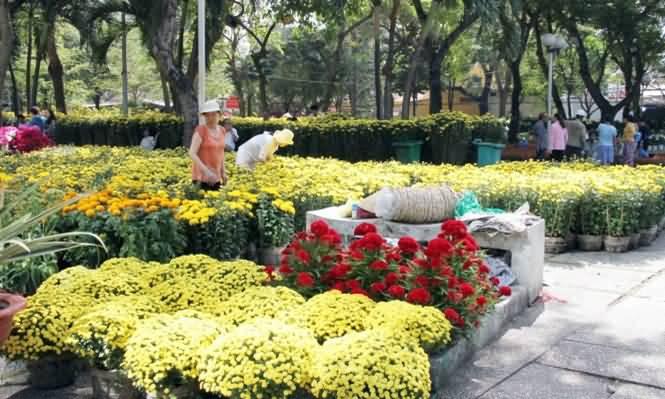 Tổ chức hội hoa xuân và chợ hoa Tết Đinh Dậu năm 2017