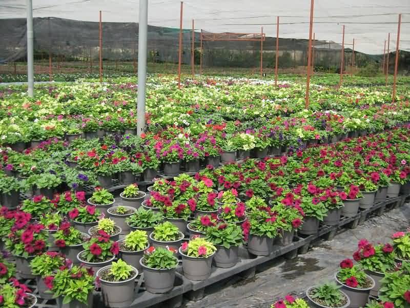 150.000 giỏ hoa phục vụ Tết Quý Tỵ 2013
