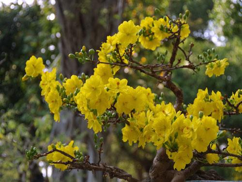 Những nét đẹp khó cưỡng trong Hội Hoa Xuân