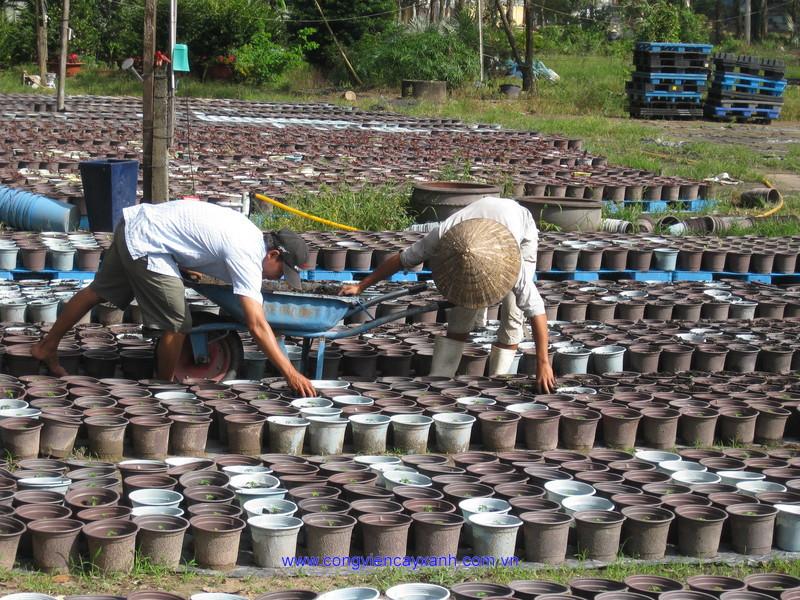 Xí nghiệp Hoa kiểng tập trung thực hiện kế hoạch sản xuất năm 2010